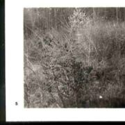 Wald005.jpg