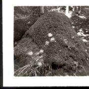 Wald140.jpg