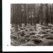 Wald007.jpg