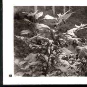 Wald053.jpg