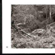 Wald011.jpg