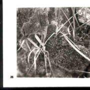 Wald026.jpg