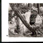 Wald018.jpg