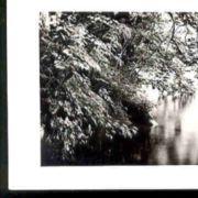 Wald016.jpg