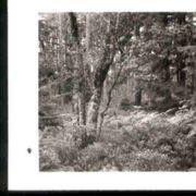 Wald009.jpg