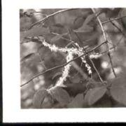 Wald142.jpg