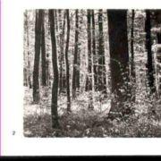 Wald002.jpg