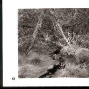 Wald012.jpg