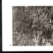Wald004.jpg