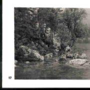 Wald017.jpg
