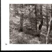 Wald014.jpg