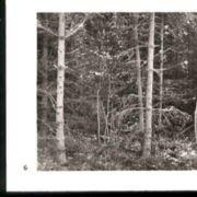 Wald006.jpg