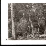 Wald010.jpg