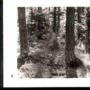 Wald003.jpg