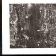 Wald144.jpg
