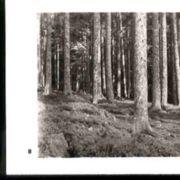 Wald008.jpg
