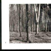 Wald001.jpg